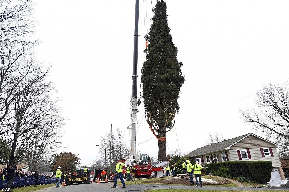 شجرة أعياد الميلاد 2