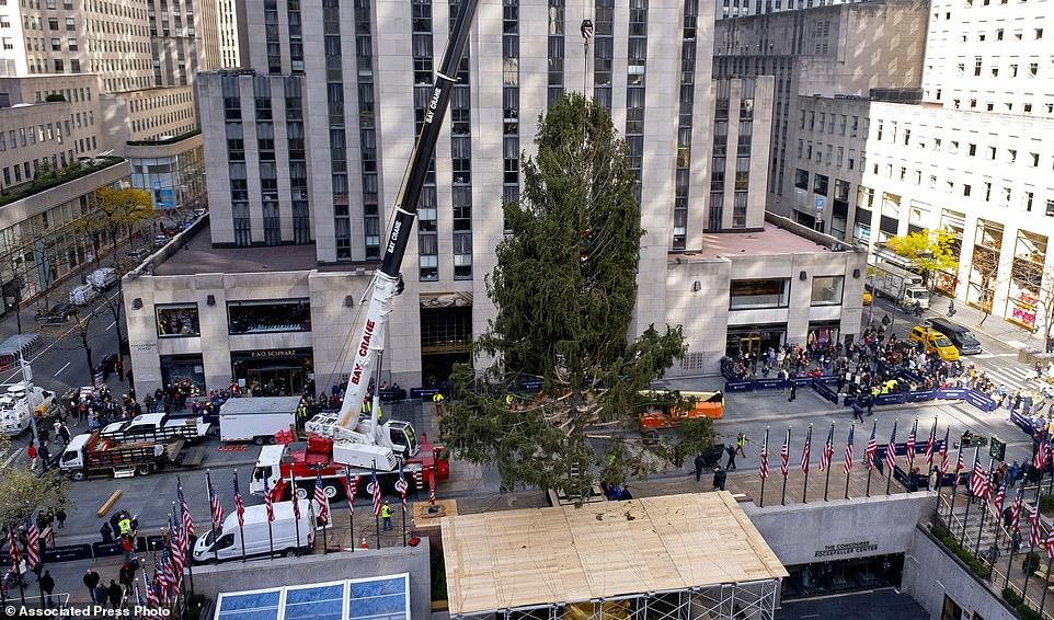 جانب من تثبيت شجرة الكريسماس وسط نيويورك