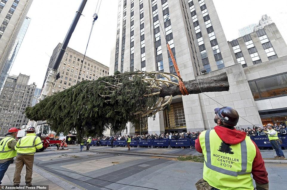 رفع الشجرة