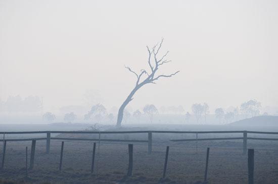 النيران تلتهم شجرة