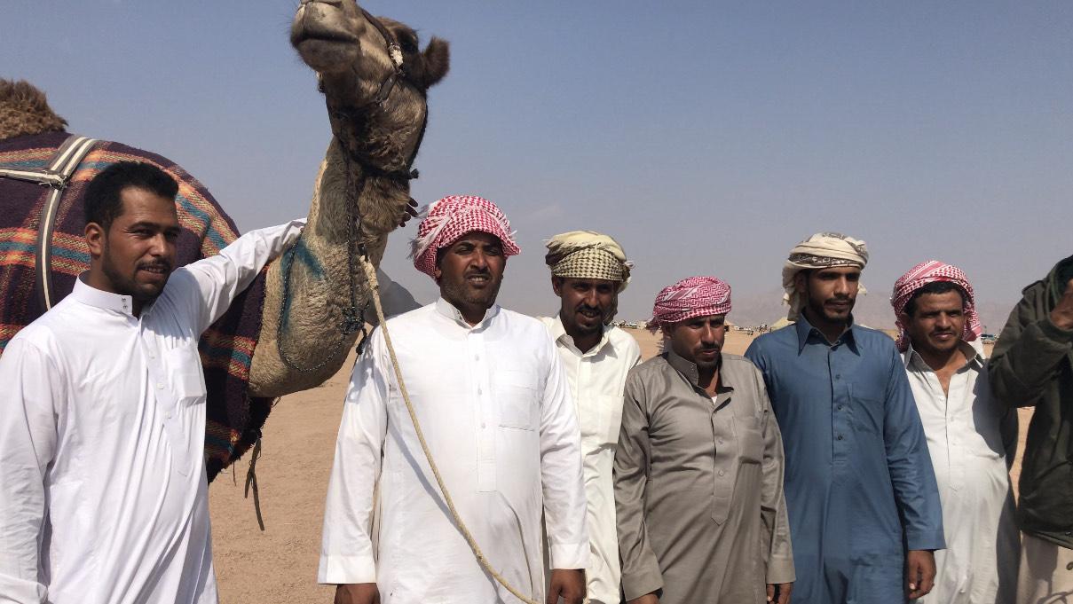المشاركون فى مهرجان الهجن بشرم الشيخ من مختلف المحافظات (10)