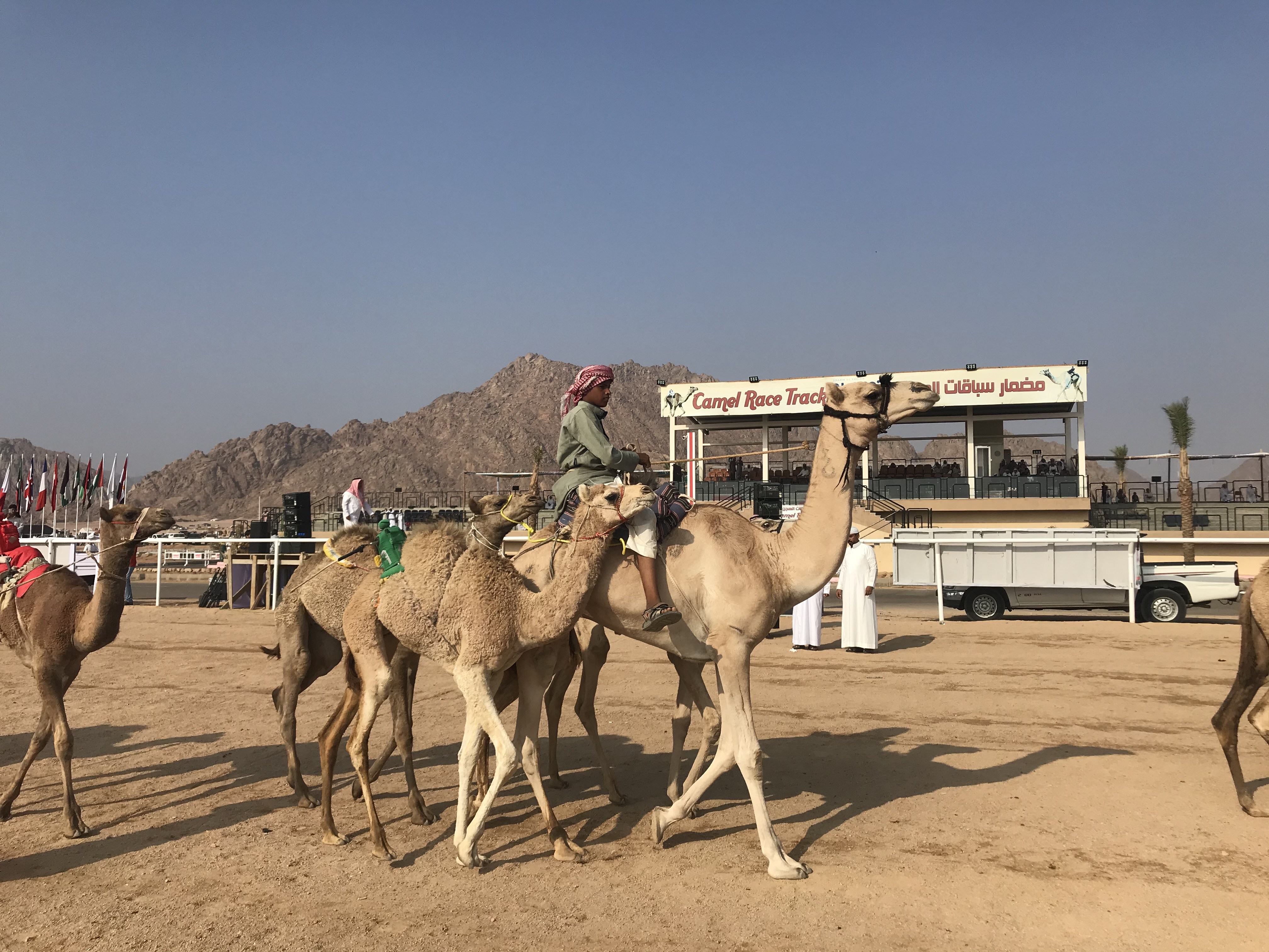 المشاركون فى مهرجان الهجن بشرم الشيخ من مختلف المحافظات (2)