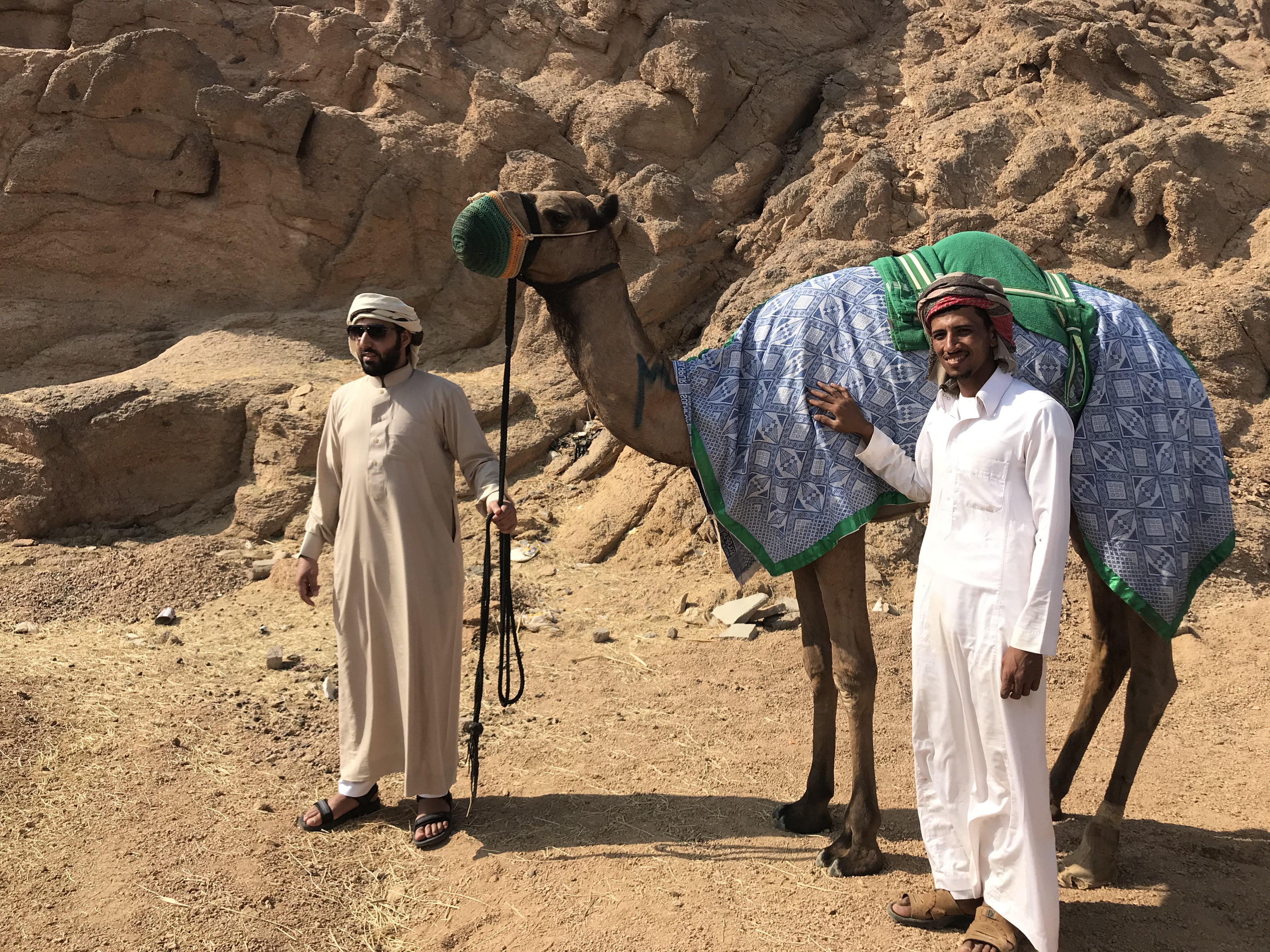 المشاركون فى مهرجان الهجن بشرم الشيخ من مختلف المحافظات (5)