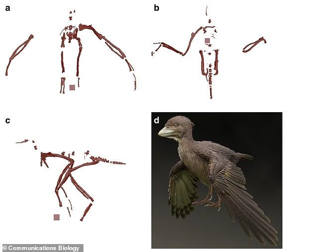 طيور ديناصورات