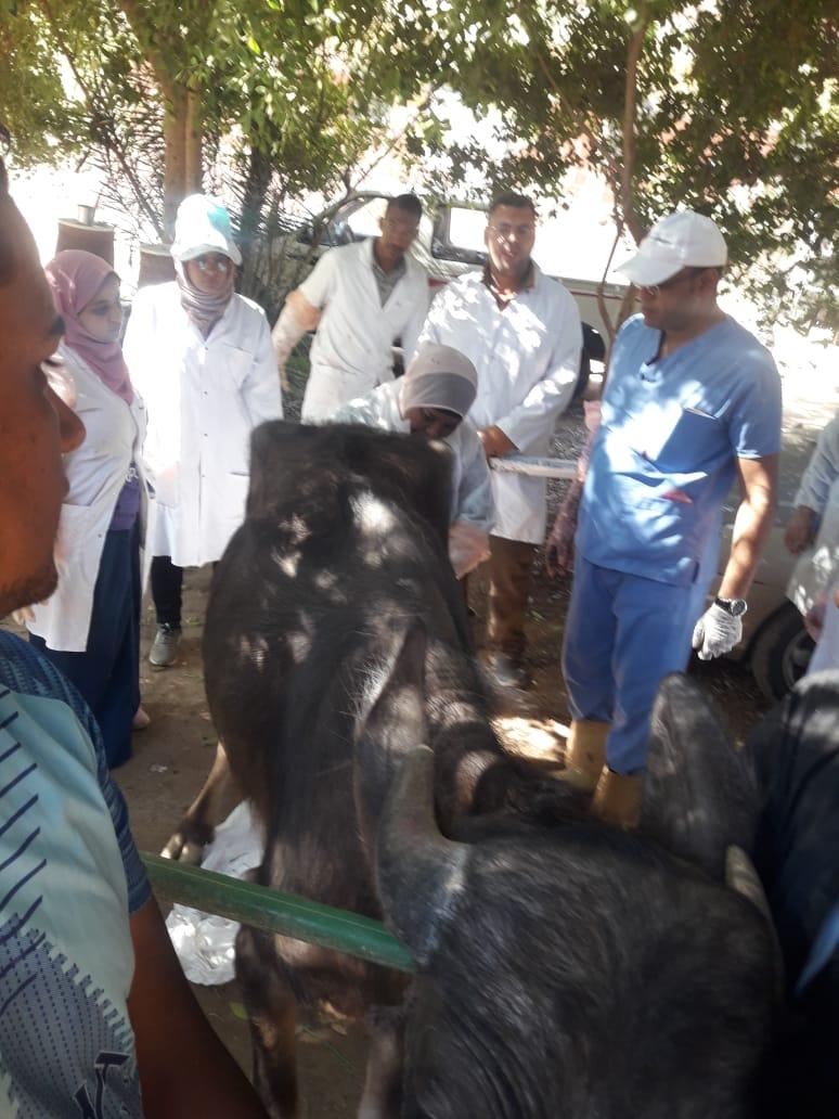 حملة  قومية بيطرية علاجية  وارشادية لمربى  الماشية  بأسوان (6)