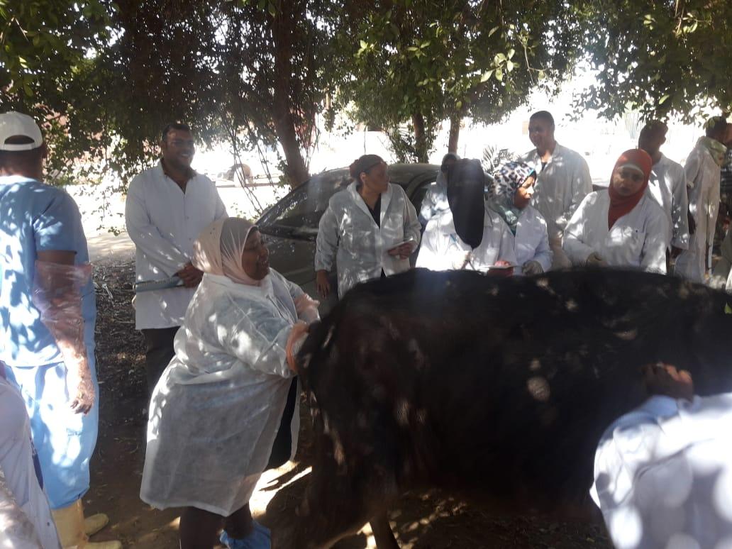 حملة  قومية بيطرية علاجية  وارشادية لمربى  الماشية  بأسوان (2)