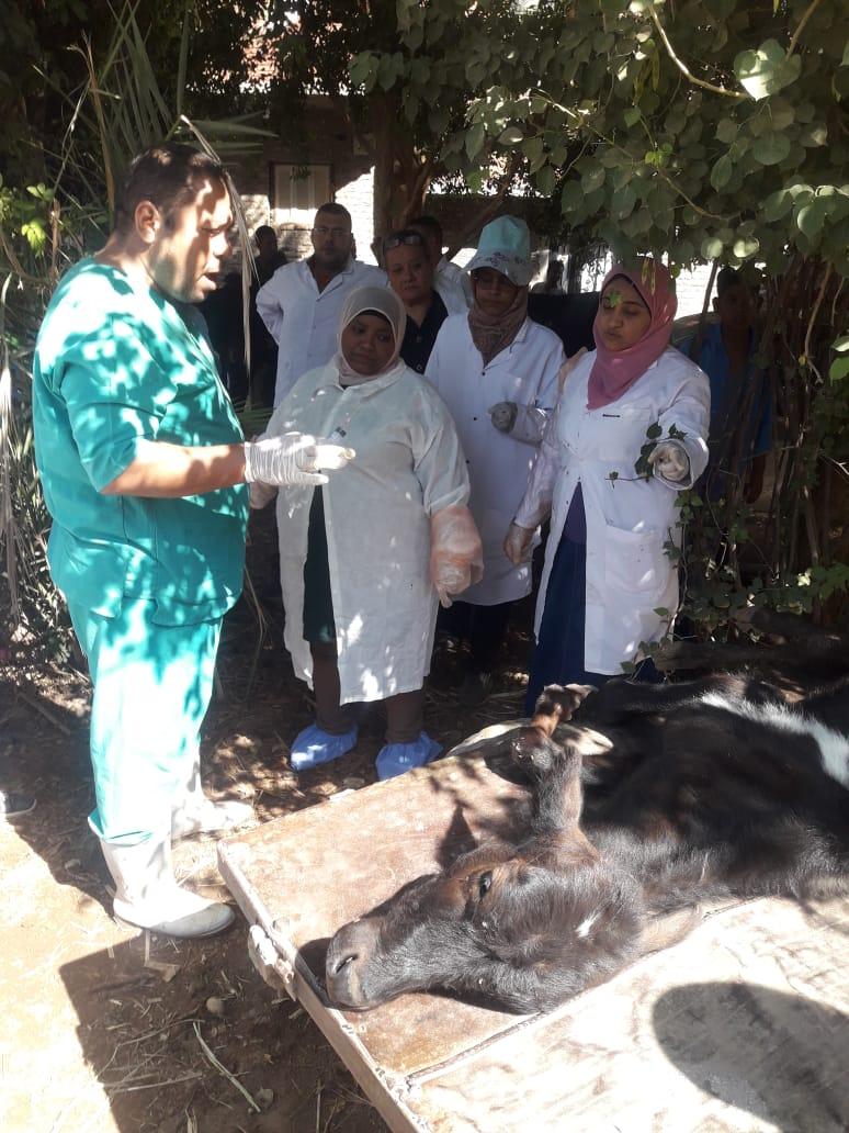حملة  قومية بيطرية علاجية  وارشادية لمربى  الماشية  بأسوان (1)