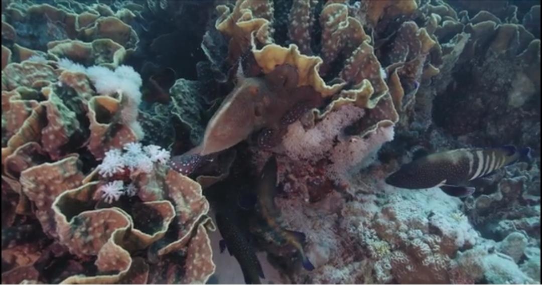 6-الشعاب المرجانية مرسي شجرة