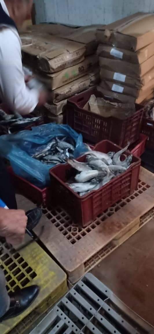 أسماك فاسدة  (3)