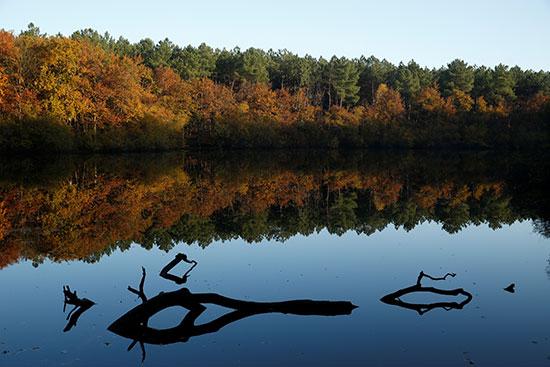 الاشجار على جانبى النهر