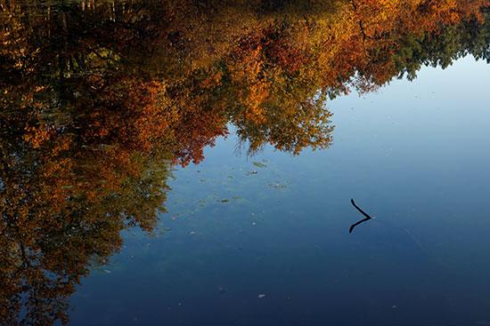 الأشجار فى فصل الخريف بفرنسا