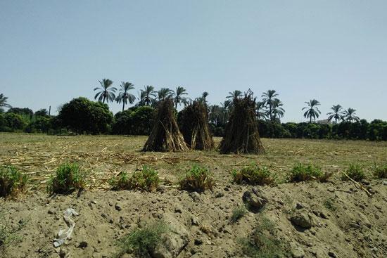 3--أراضى-زراعية-أصابها-البوار-نتيجة-مياه-الرشح