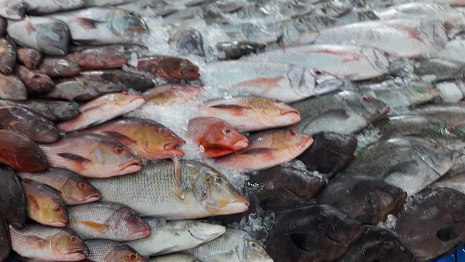 صور تعرف على أسعار أسماك البحر الأحمر بحلقة سمك الغردقة اليوم السابع