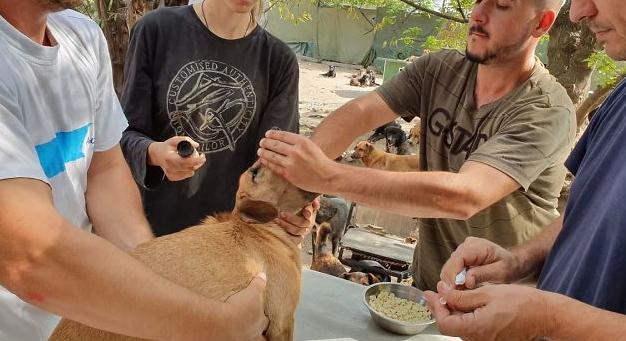 تطعيم الكلاب