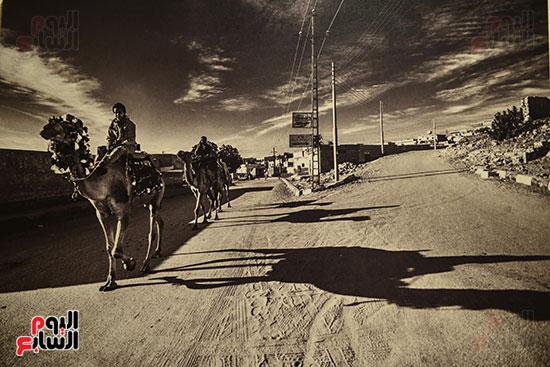 صالون النيل للتصوير الضوئى   (15)