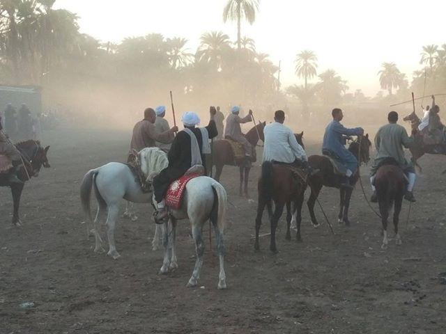 سباقات الخيول في قري محافظة الأقصر إحتفالات بالمولد النبوي الشريف (5)