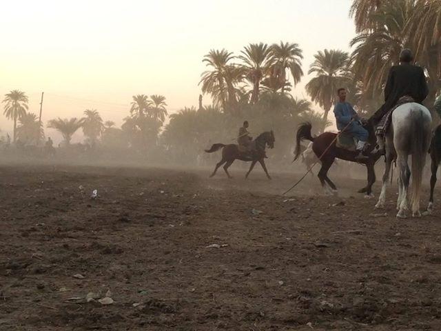 سباقات الخيول في قري محافظة الأقصر إحتفالات بالمولد النبوي الشريف (6)