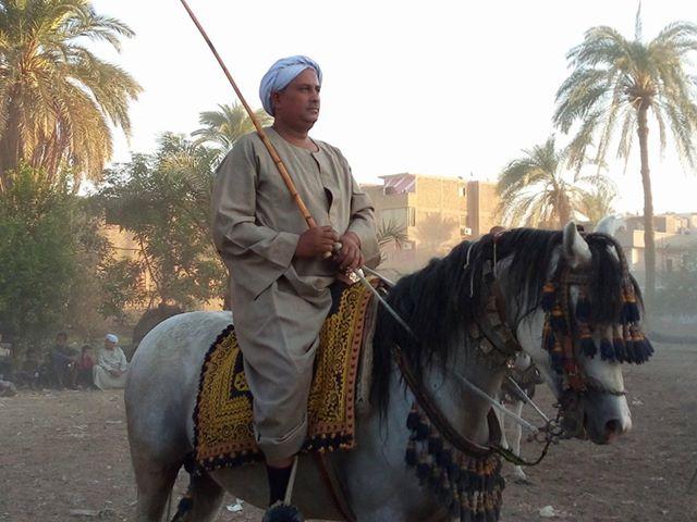 سباقات الخيول في قري محافظة الأقصر إحتفالات بالمولد النبوي الشريف (3)