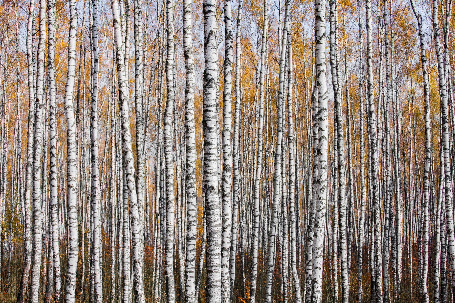 غابة الخريف 2