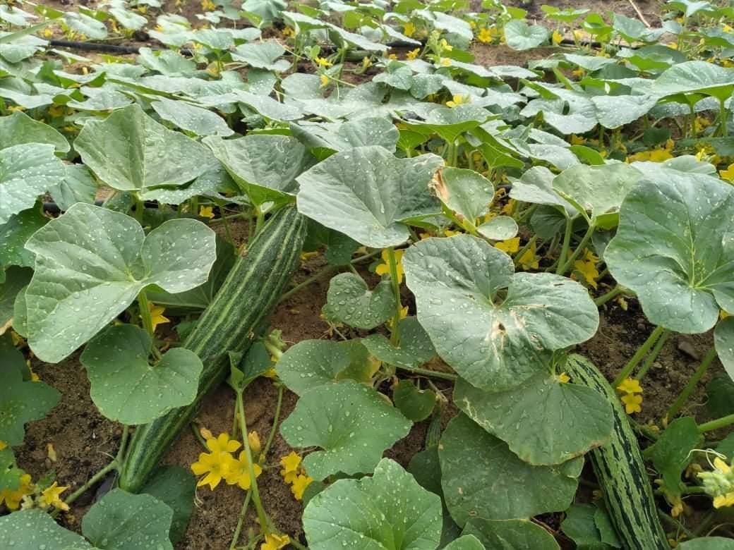 خضراوات وفواكه (2)