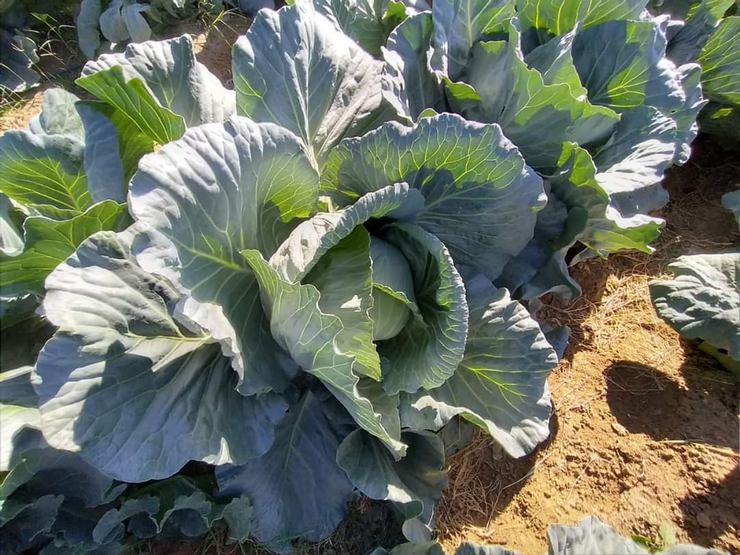 خضراوات وفواكه (5)