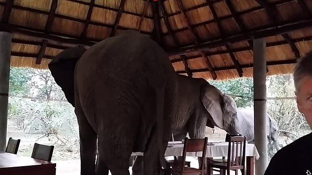 مغادرة الأفيال