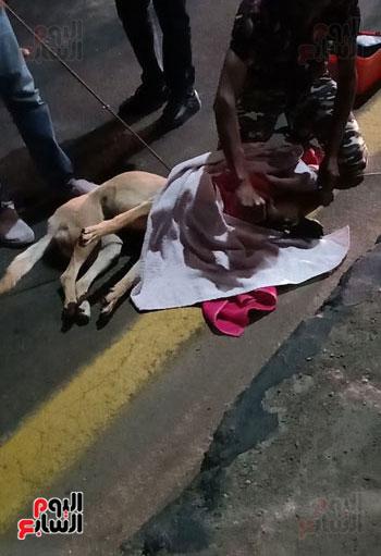 إنقاذ كلب بلدى صدمته سيارة فى شوارع شرم الشيخ (1)