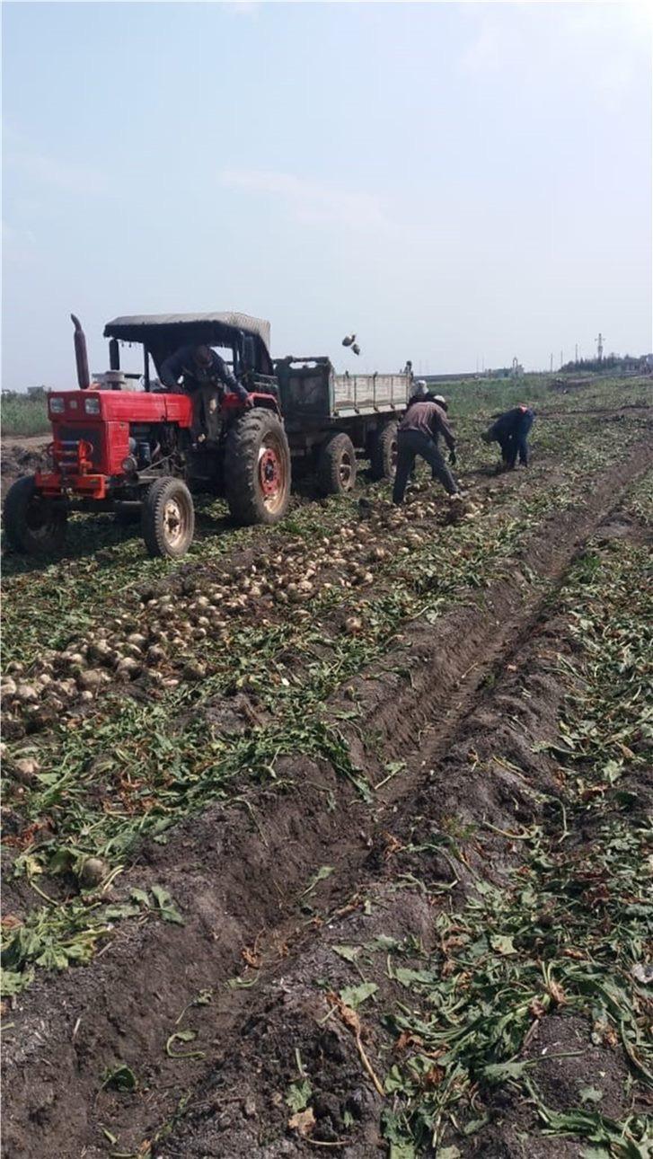 زراعة محصولي القطن وبنجر السكر باستخدام المياه المالحة  (6)