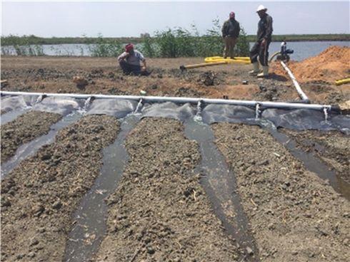 زراعة محصولي القطن وبنجر السكر باستخدام المياه المالحة  (1)