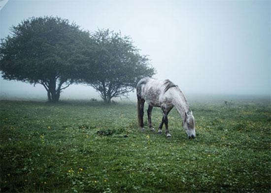 حصان فى مرج بمنطقة مايكوب فى جمهورية أديجيا الروسية
