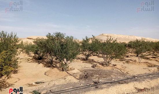 إنجازات جهاز تعمير سيناء على أرض الفيروز (6)