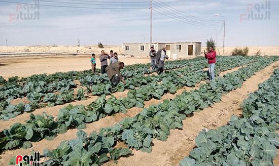 إنجازات جهاز تعمير سيناء على أرض الفيروز (9)