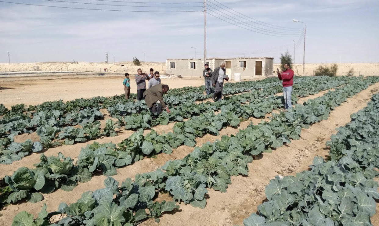 المشروعات التنموية على أرض الفيروز (18)