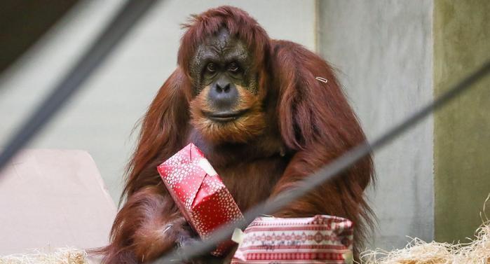 78-130452-jungle-man-gifts-christmas-dessert-germany-3