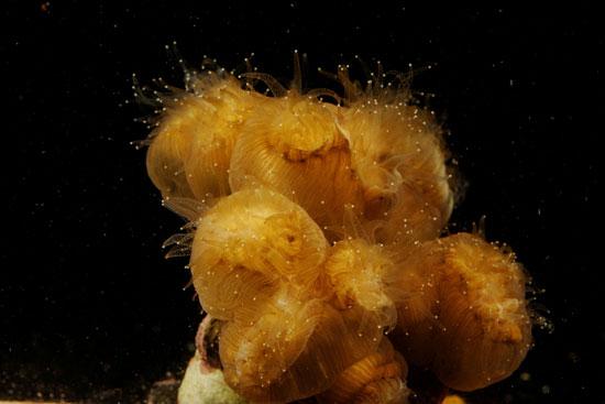جانب من الشعاب المرجانية