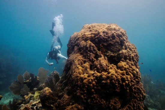 حقن الشعاب المرجانية