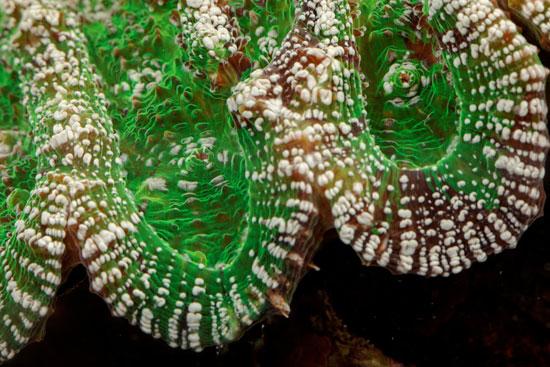جانب من الشعب المرجانية