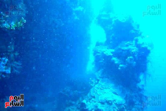 محمية-الجزر-الشمالية-درة-محميات-البحر-الأحمر-(8)