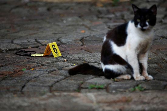 قطة فى موقع الحادث