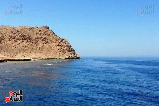 محمية-الجزر-الشمالية-درة-محميات-البحر-الأحمر-(11)