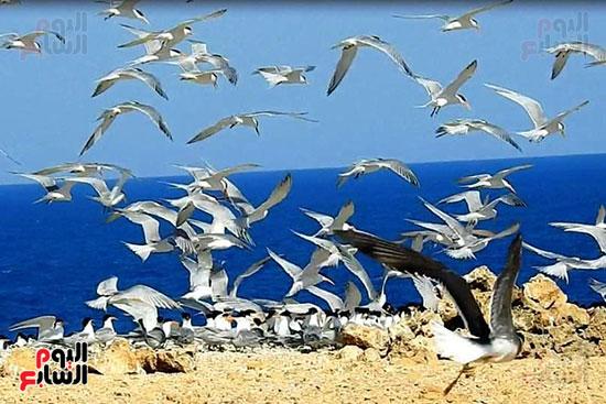 محمية-الجزر-الشمالية-درة-محميات-البحر-الأحمر-(3)