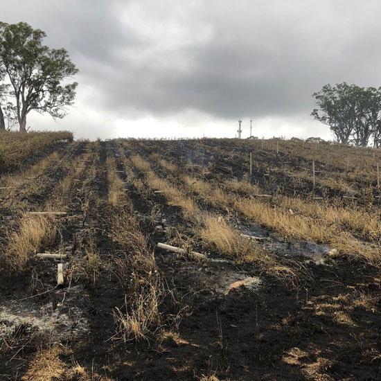 النيران تلتهم المساحات الزراعية