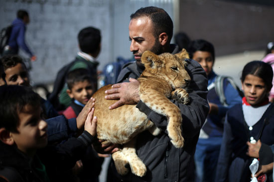 مواطن-فلسطينى-يحتضن-شبل-الاسد