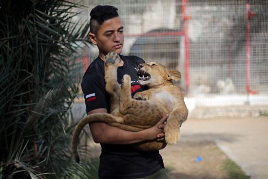شاب-فلسطينى-يحمل-شبل-الاسد