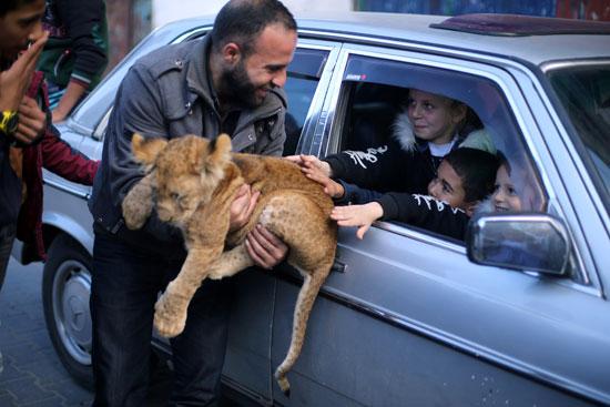 فلسطينى-يعرض-شبل-الاسد-على-احد-المارة