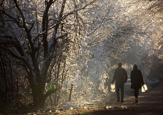 الثلوج تغطى الشجر