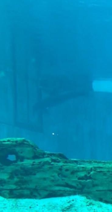 الدولفين