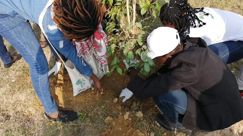متطوعو الاتحاد الافريقى يزرعون 100 شجرة بمنتدى 15 مايو (2)
