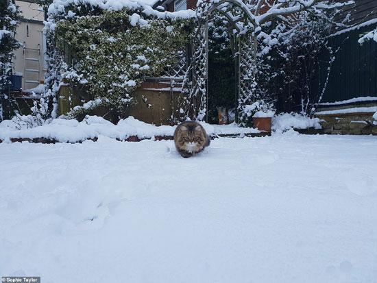 الثلوج كست بريطانيا فو اسوأ موجة طقس منذ 7 سنوات  (19)