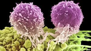 الصبار يحارب خلايا السرطان